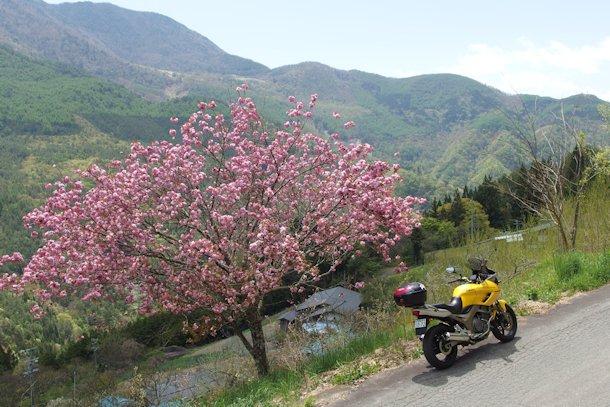 春の山.JPG