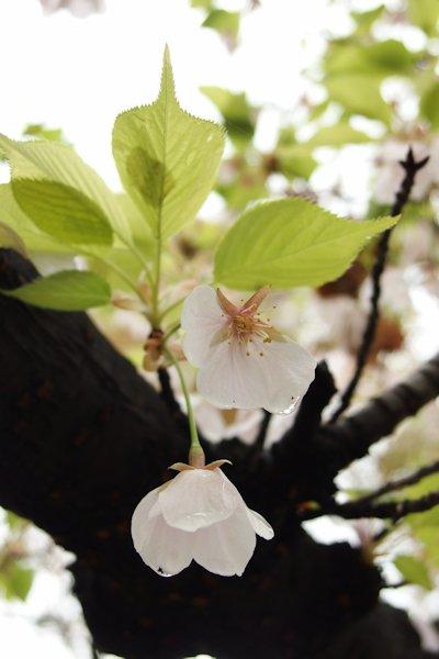 花から若葉へ.JPG