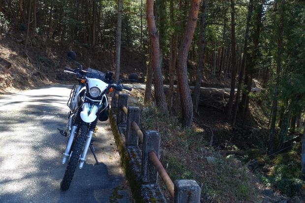 名もなき林道.JPG