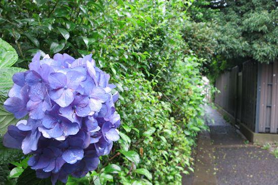 梅雨的2.JPG